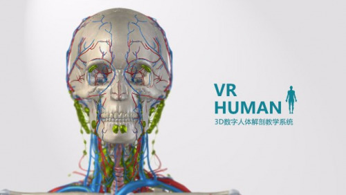 VR-Human virtual human anatomy teaching system