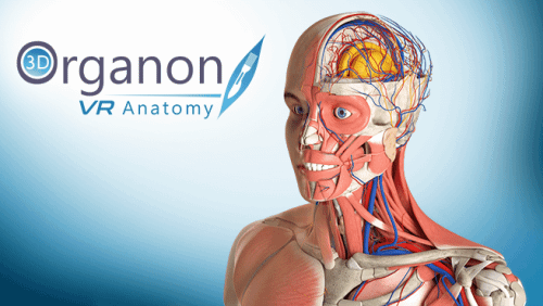 3D Organon VR Anatomy