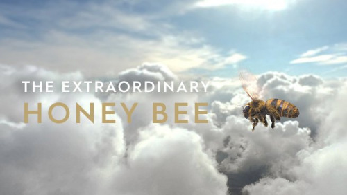 The Extraordinary Honey Bee
